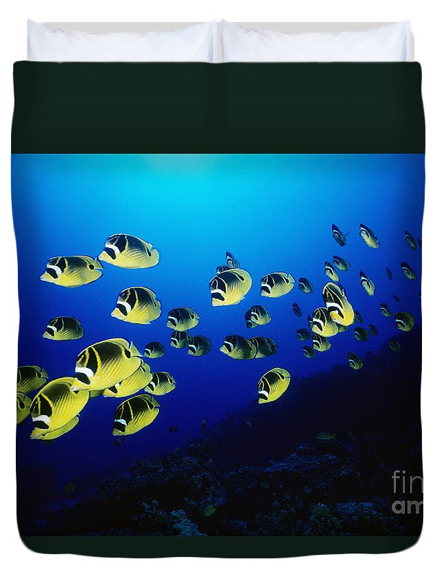 Animal Art Duvet Cover featuring the photograph Raccoon Butterflyfish by Dave Fleetham - Printscapes