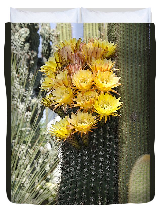 Cactus Duvet Cover featuring the photograph Yellow Cactus Flowers by Jim And Emily Bush