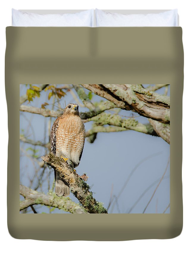 Bird Duvet Cover featuring the photograph Birds by Karen Hart