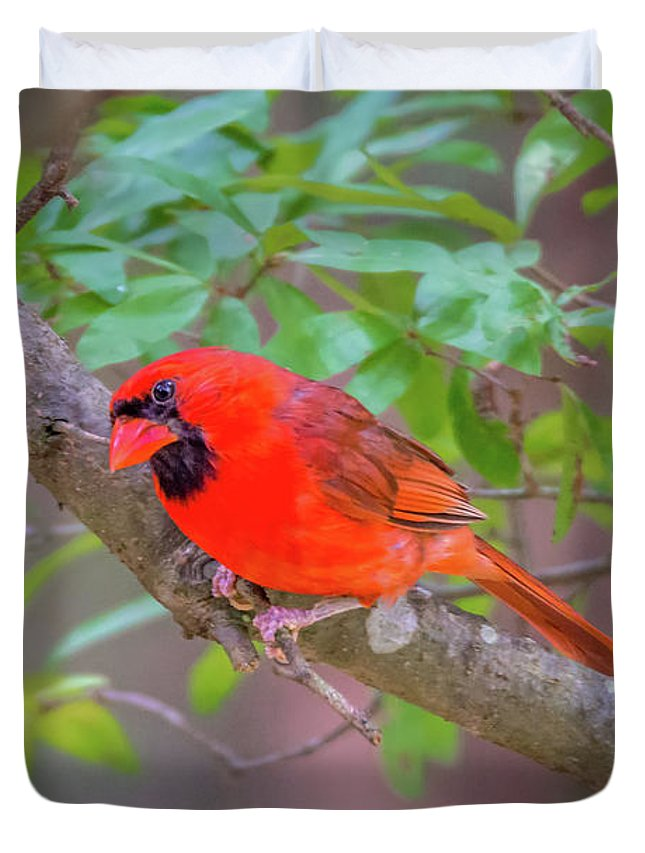 Cardinal Duvet Cover featuring the photograph Cardinal Birds Hanging Out On A Tree by Alex Grichenko