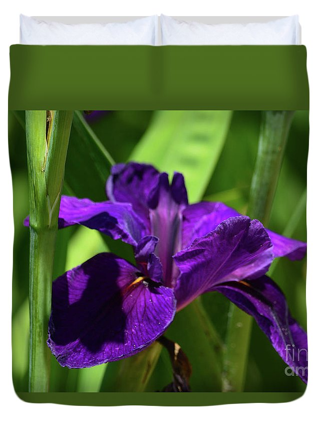 Deep Purple Iris Duvet Cover featuring the photograph Deep Purple Iris by Ruth Housley