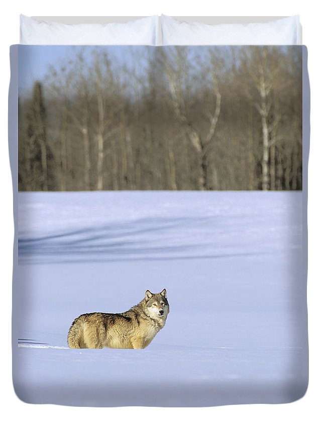 Afternoon Duvet Cover featuring the photograph Gray Wolf by John Hyde - Printscapes