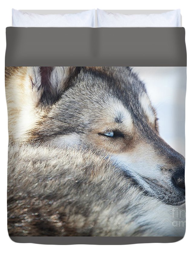 Dog Duvet Cover featuring the photograph Huskies by Kati Finell