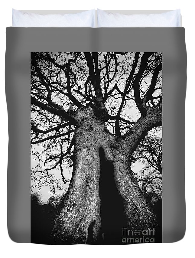 Old Duvet Cover featuring the photograph Old Tree by Ulisse Bart