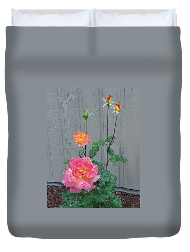 Rose Duvet Cover featuring the photograph 5 Roses In Rain by Shirley Heyn