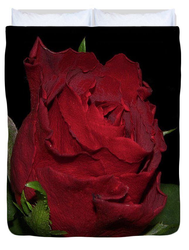 Flowers Duvet Cover featuring the photograph Red Rose by Elvira Ladocki
