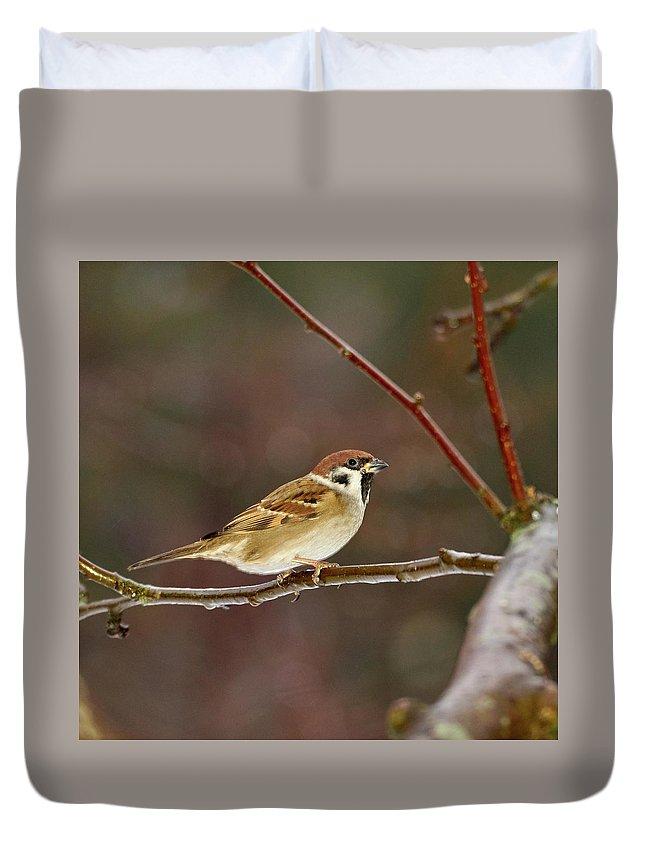 Lehtokukka Duvet Cover featuring the photograph Eurasian Tree Sparrow by Jouko Lehto