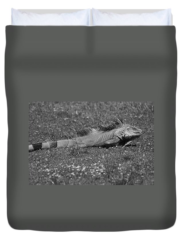Sun Duvet Cover featuring the photograph I Iguana by Rob Hans