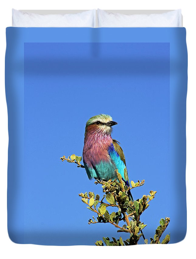 Lilac Breasted Roller Duvet Cover featuring the photograph Lilac Breasted Roller by Tony Murtagh