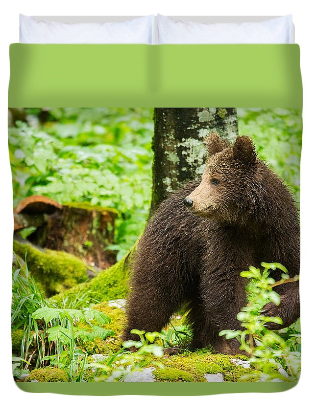 Brown Duvet Cover featuring the photograph One Year Old Brown Bear In Slovenia by Ian Middleton
