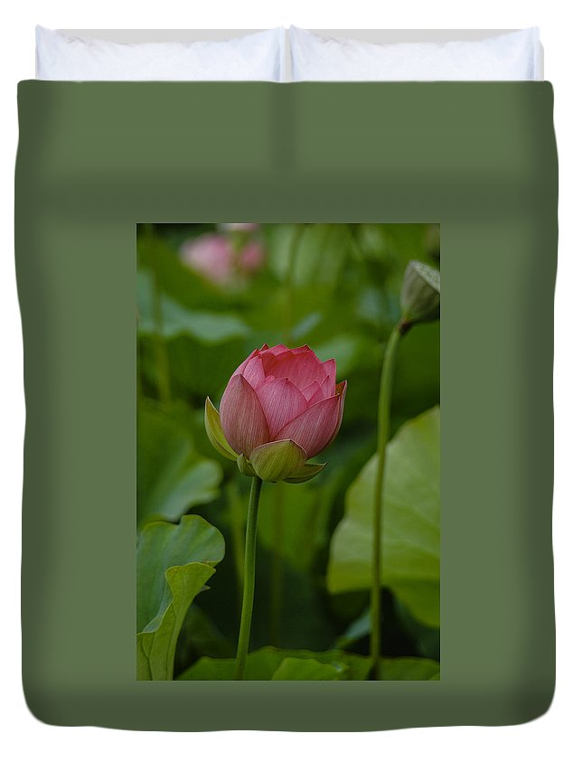 Flower. Lotus Duvet Cover featuring the photograph 65 by Garth Pillsbury