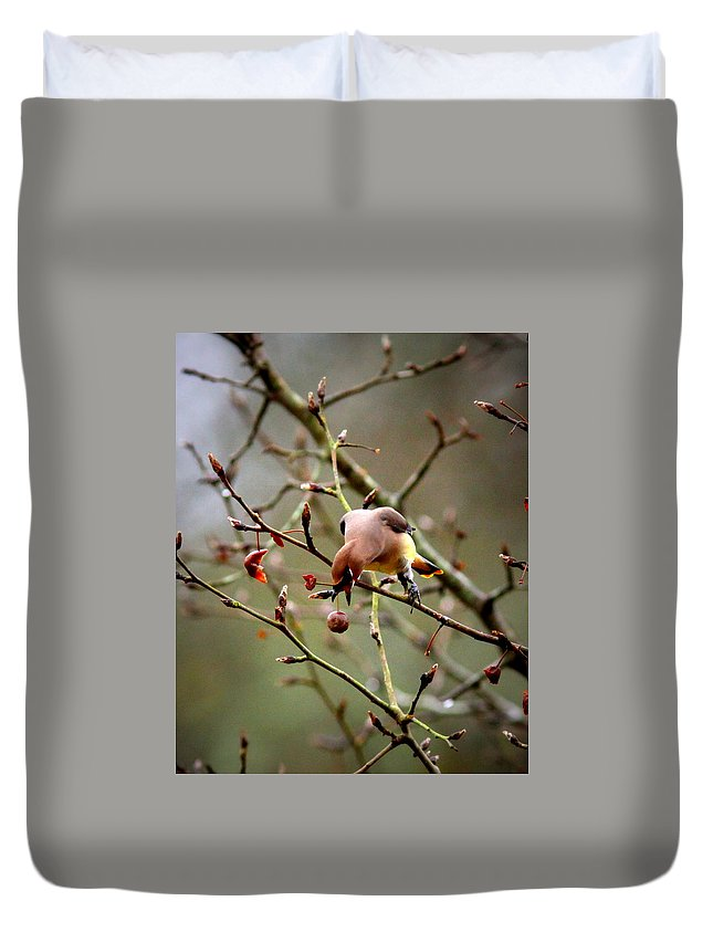 Cedar Waxwing Duvet Cover featuring the photograph 6634-002 - Cedar Waxwing by Travis Truelove