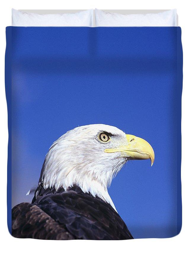 Alaska Duvet Cover featuring the photograph Bald Eagle by John Hyde - Printscapes