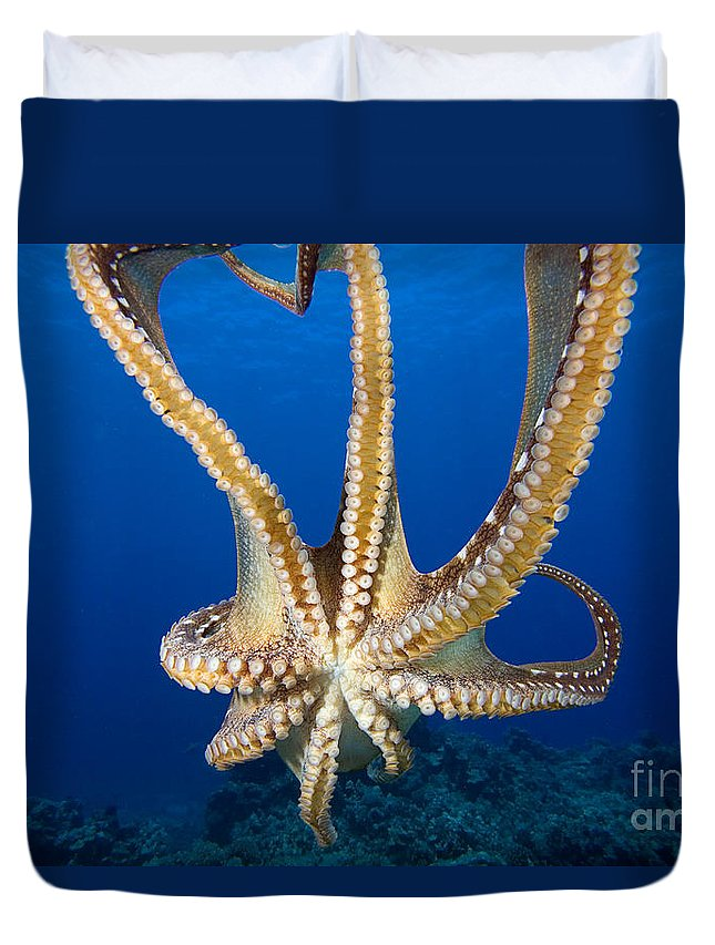 Abstract Duvet Cover featuring the photograph Hawaii, Day Octopus by Dave Fleetham - Printscapes