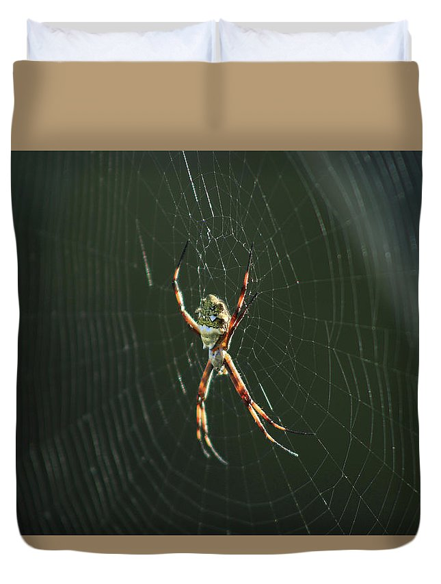 Orb Weaver Spider Duvet Cover featuring the photograph Spider On A Web by Robert Hamm