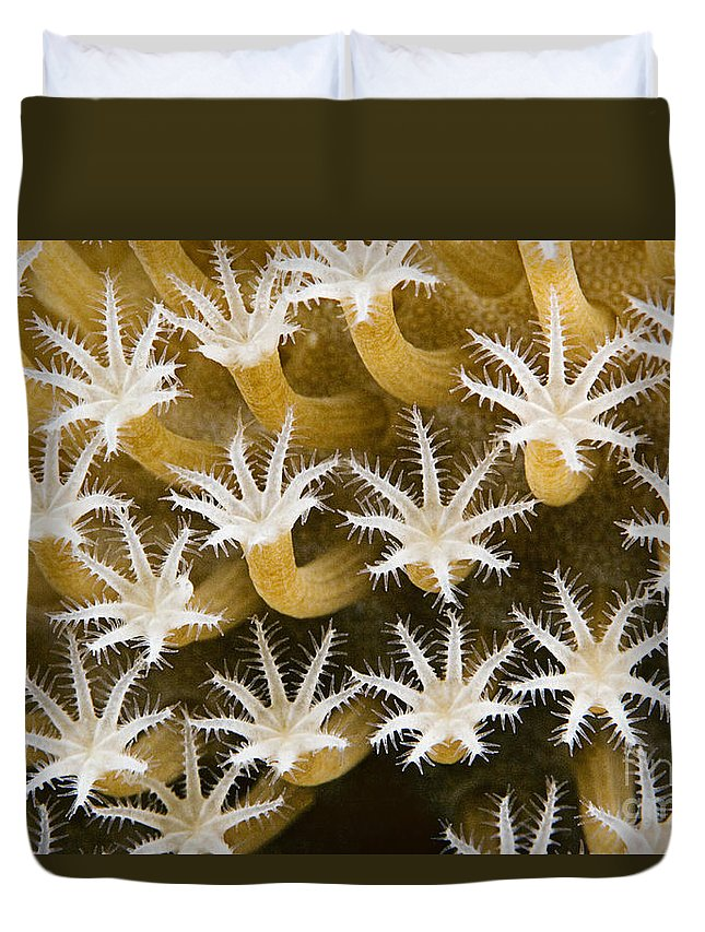 Abstract Duvet Cover featuring the photograph Malaysia, Marine Life by Dave Fleetham - Printscapes