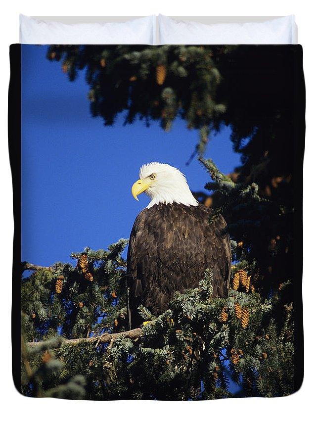 Alaska Duvet Cover featuring the photograph Bald Eagle by John Hyde - Printscapes