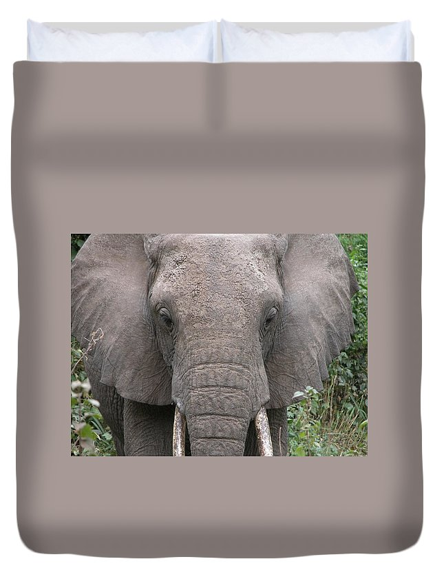 Elephants Duvet Cover featuring the photograph Elephant by FL collection