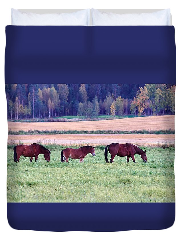 Finland Duvet Cover featuring the photograph Horses Of The Fall by Jouko Lehto