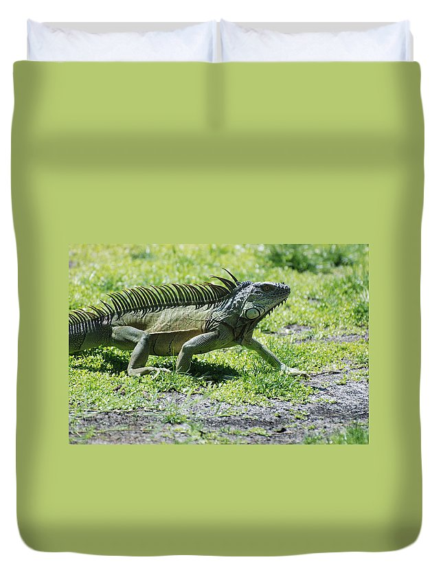 Macro Duvet Cover featuring the photograph I Iguana by Rob Hans
