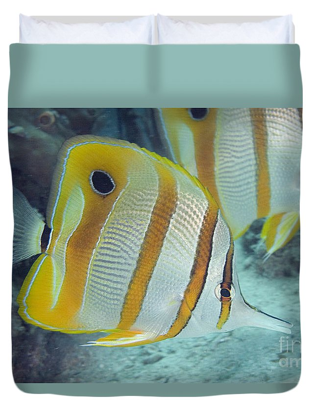 Animal Art Duvet Cover featuring the photograph Malaysia Marine Life by Dave Fleetham - Printscapes