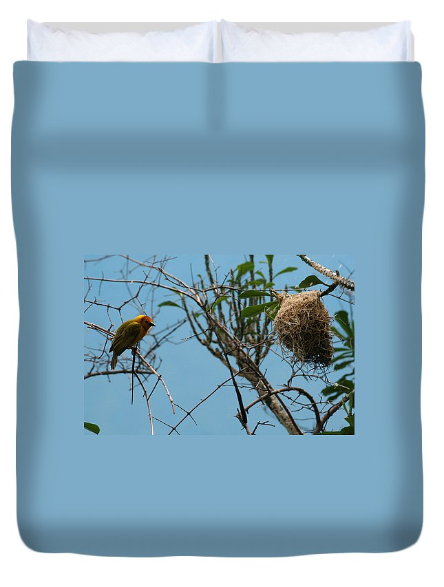 Bird Duvet Cover featuring the photograph A Bird In 3d by Paul SEQUENCE Ferguson       sequence dot net