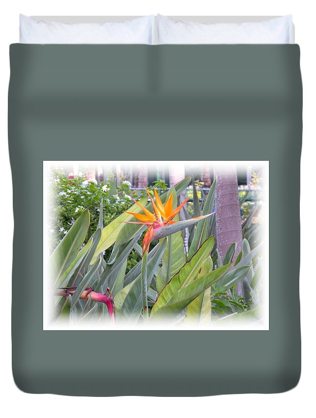Plant Duvet Cover featuring the photograph A Bird In Paradise by Maria Bonnier-Perez