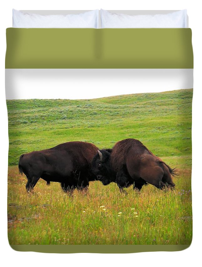 Buffalo Duvet Cover featuring the photograph A Bison Brawl by Jeff Swan