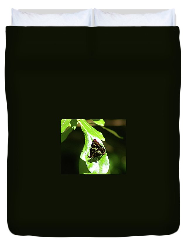Butterfly Duvet Cover featuring the photograph A Butterfly In The Sun by Jeff Swan