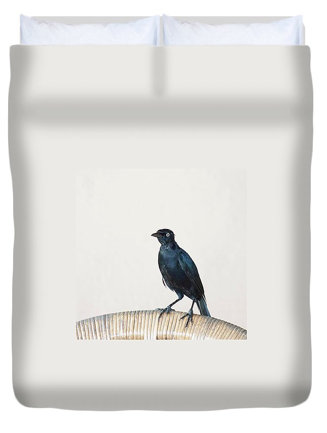 Caribgrackle Duvet Cover featuring the photograph A Carib Grackle (quiscalus Lugubris) On by John Edwards