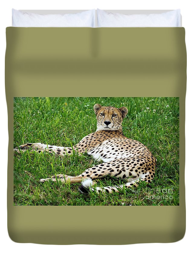 Cheetah Duvet Cover featuring the photograph A Cheetah Resting On The Grass by Kenneth Lempert