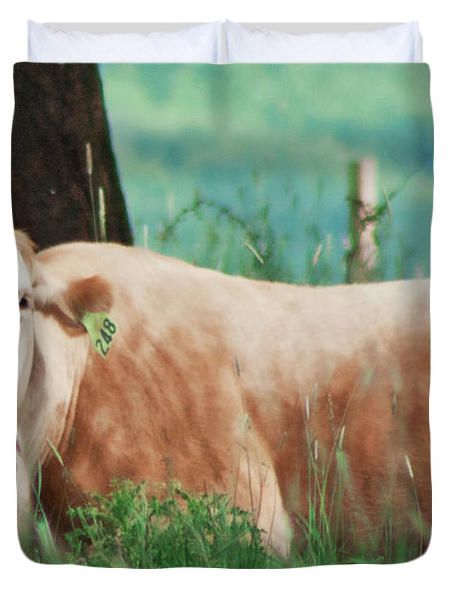 Cow Duvet Cover featuring the photograph A Cow's Tale - Lazy Day by Janie Johnson