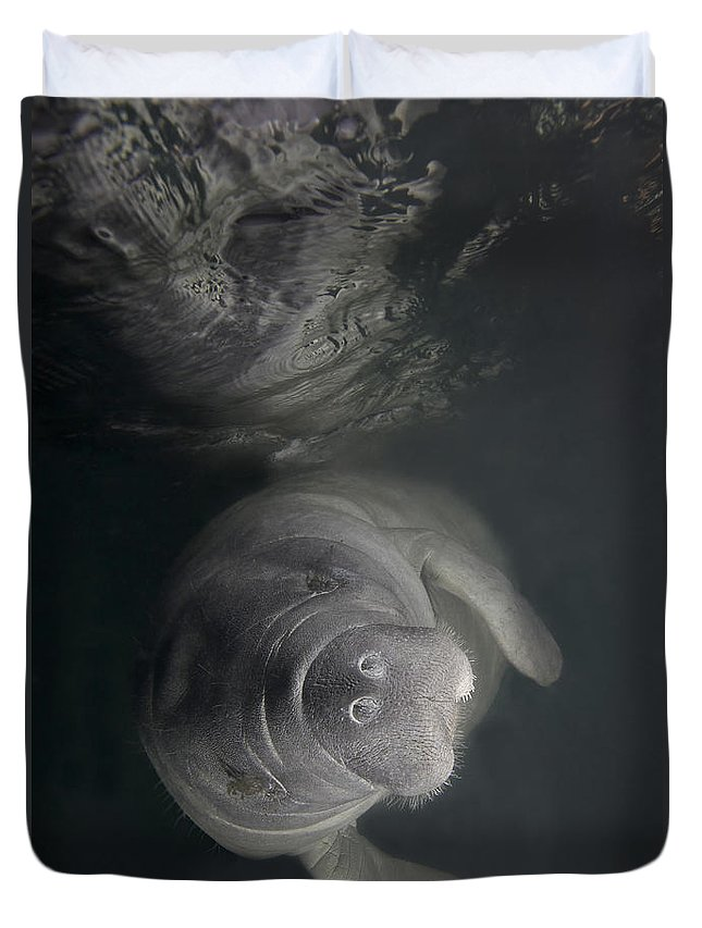Florida Duvet Cover featuring the photograph A Florida Manatee In The Warm Waters by Terry Moore