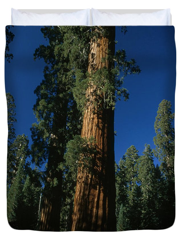 Outdoors Duvet Cover featuring the photograph A Giant Sequoia Tree Towers by Phil Schermeister