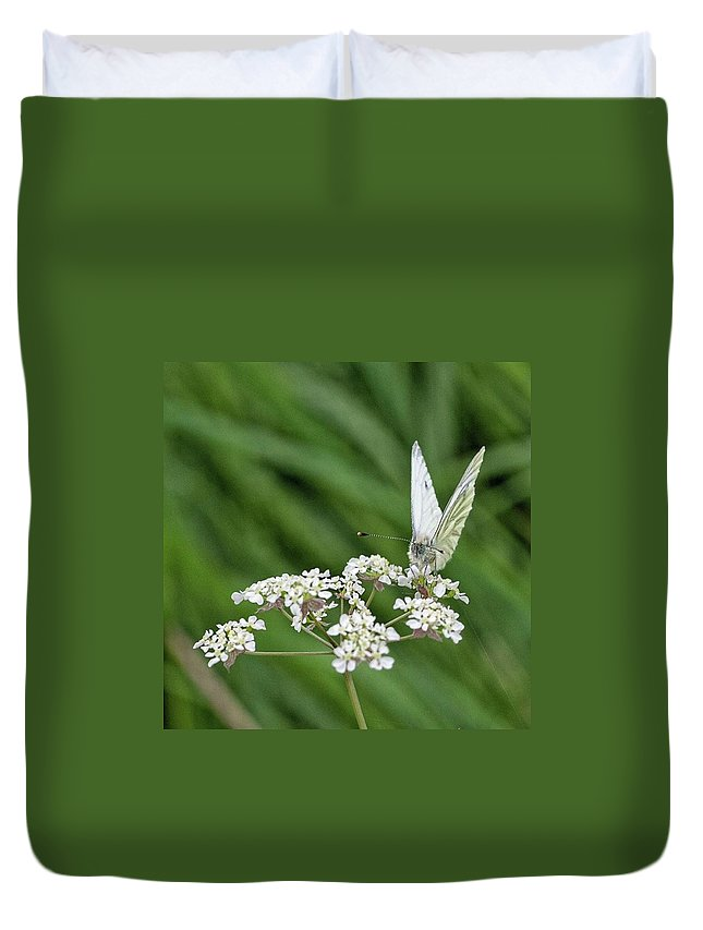Insectsofinstagram Duvet Cover featuring the photograph A Green-veined White (pieris Napi) by John Edwards