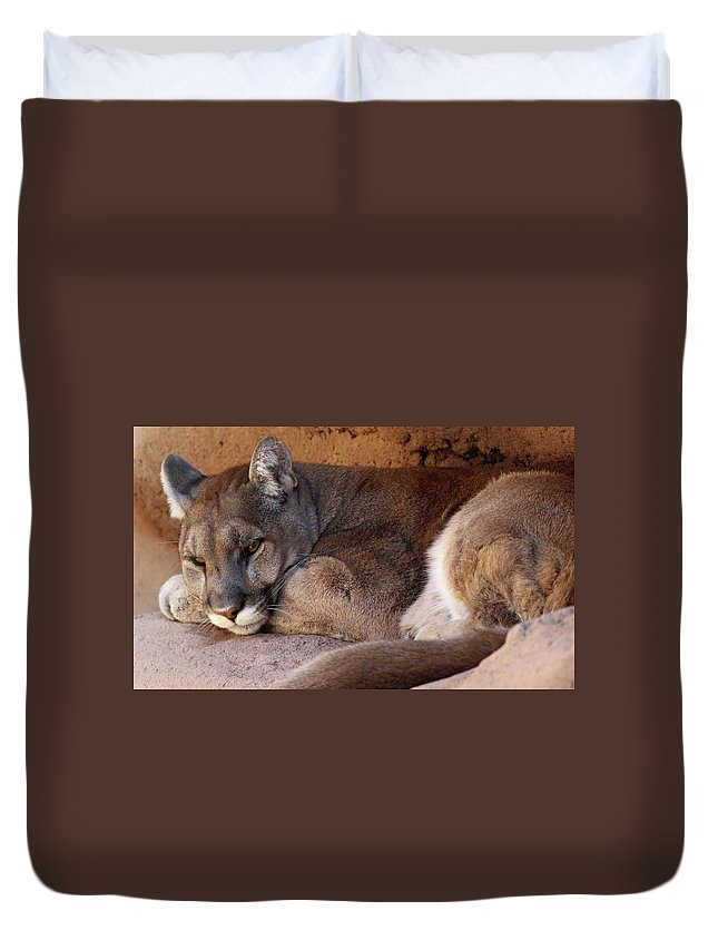 Animal Duvet Cover featuring the photograph A Little Rest by Christina Boggs