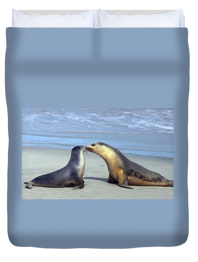 Sea Lion Duvet Cover featuring the photograph A Mothers Love by Mike Dawson