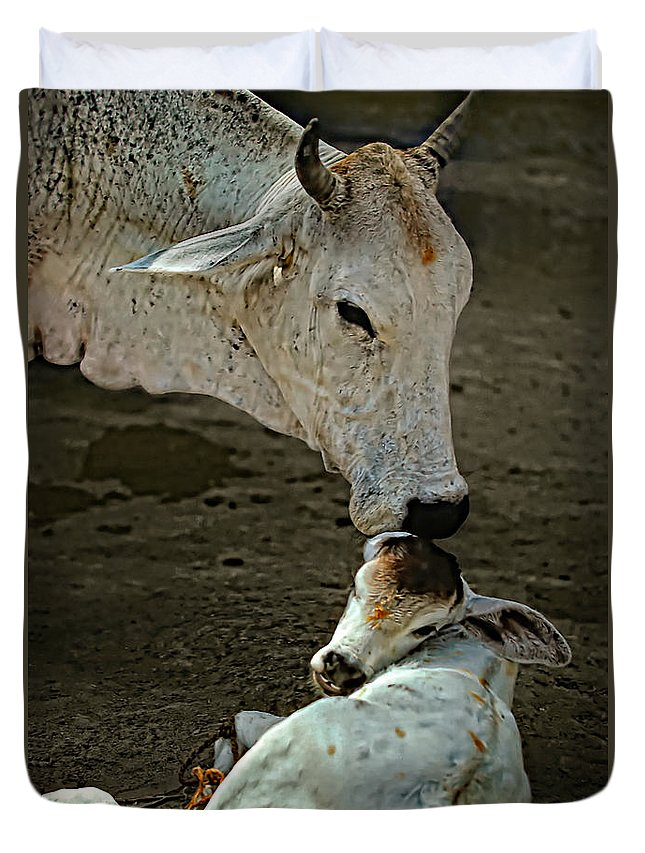 Cow Duvet Cover featuring the photograph A Mother's Love by Steve Harrington