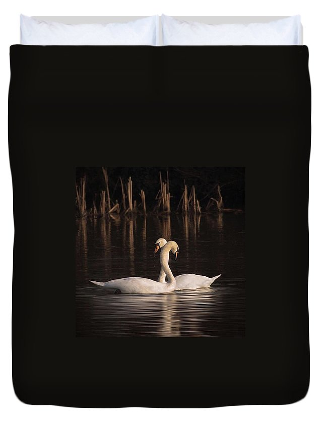 Nuts_about_birds Duvet Cover featuring the photograph A Painting Of A Pair Of Mute Swans by John Edwards