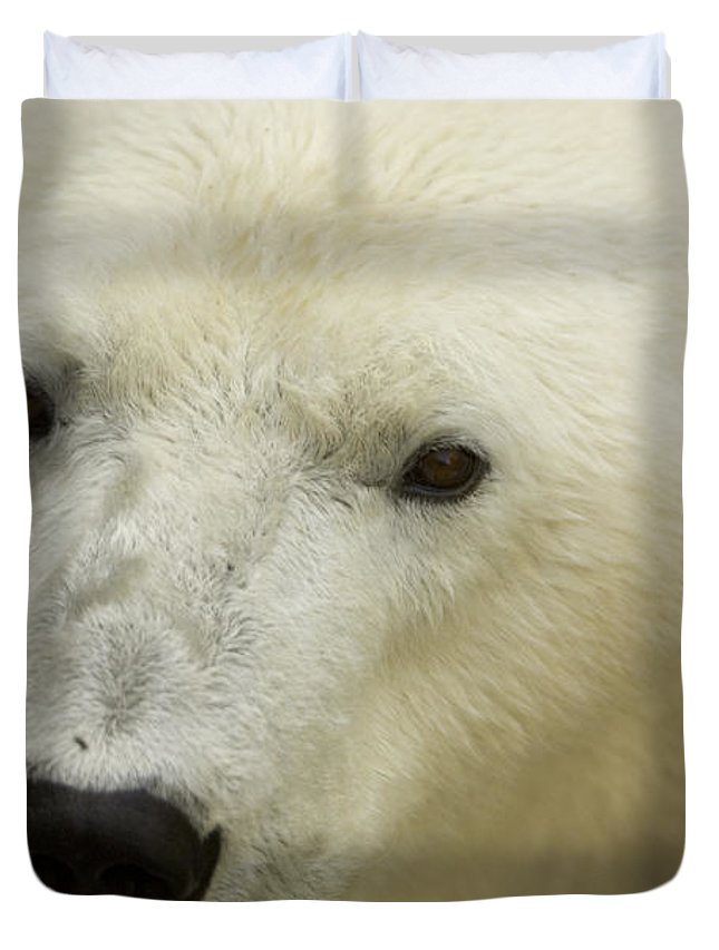Photography Duvet Cover featuring the photograph A Polar Bear At The Henry Doorly Zoo by Joel Sartore