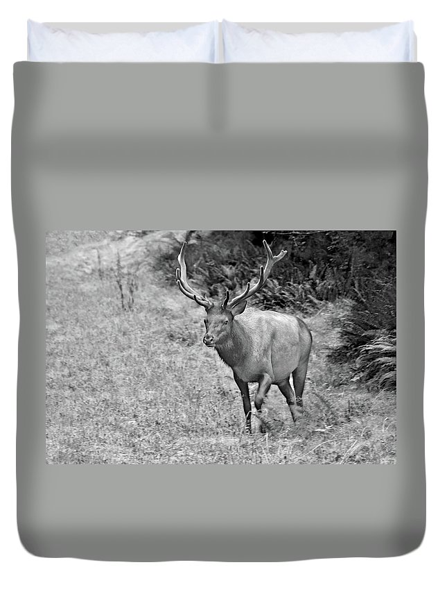 Olympic Elk Duvet Cover featuring the photograph A Rack Of Antlers - Roosevelt Elk - Olympic National Park Wa by Christine Till
