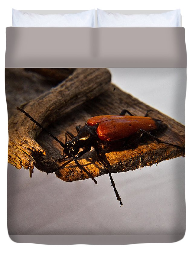 Red Duvet Cover featuring the photograph A Red Glowing Beetle by Douglas Barnett