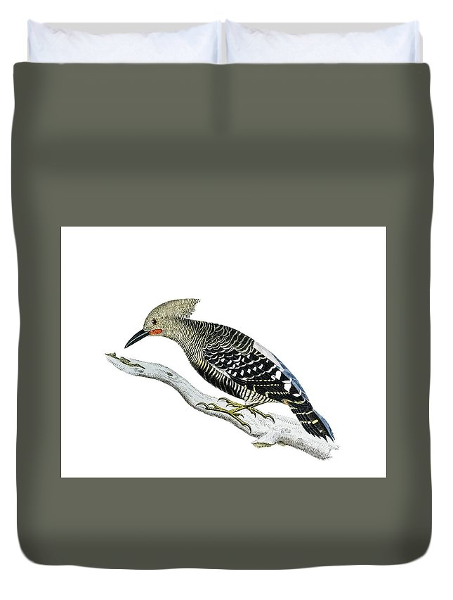 Woodpecker Duvet Cover featuring the painting A Red Headed Woodpecker 2 by Douglas Barnett