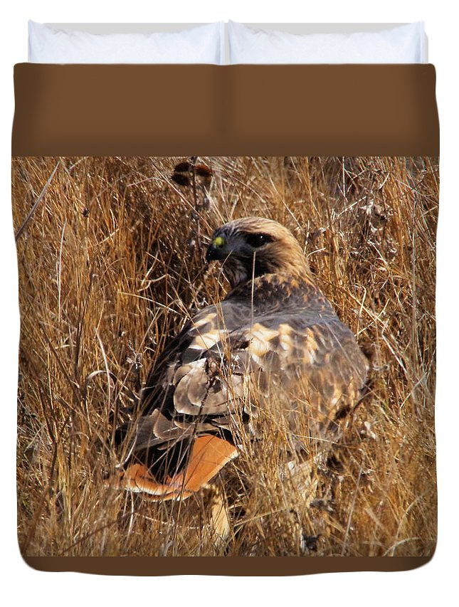 Hawk Duvet Cover featuring the photograph A Red Tailed Hawk by Jeff Swan