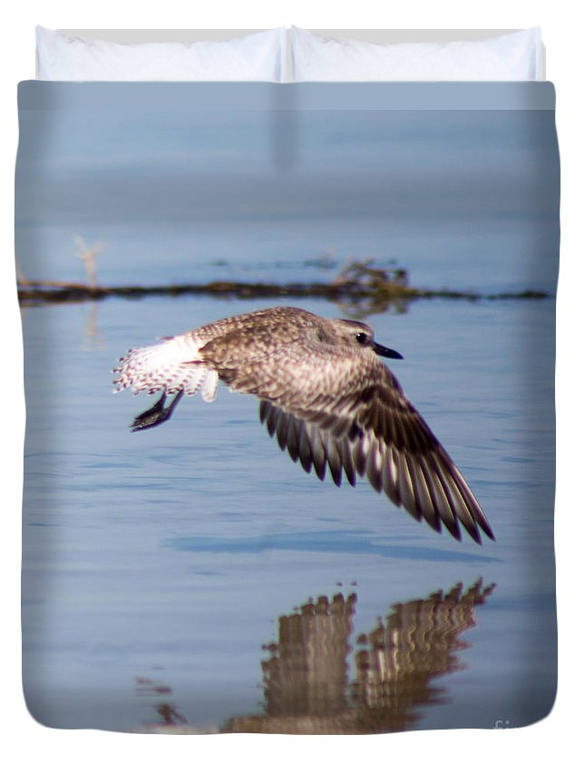 Sanderling Duvet Cover featuring the photograph A Startled Sanderling By Darrell Hutto by J Darrell Hutto