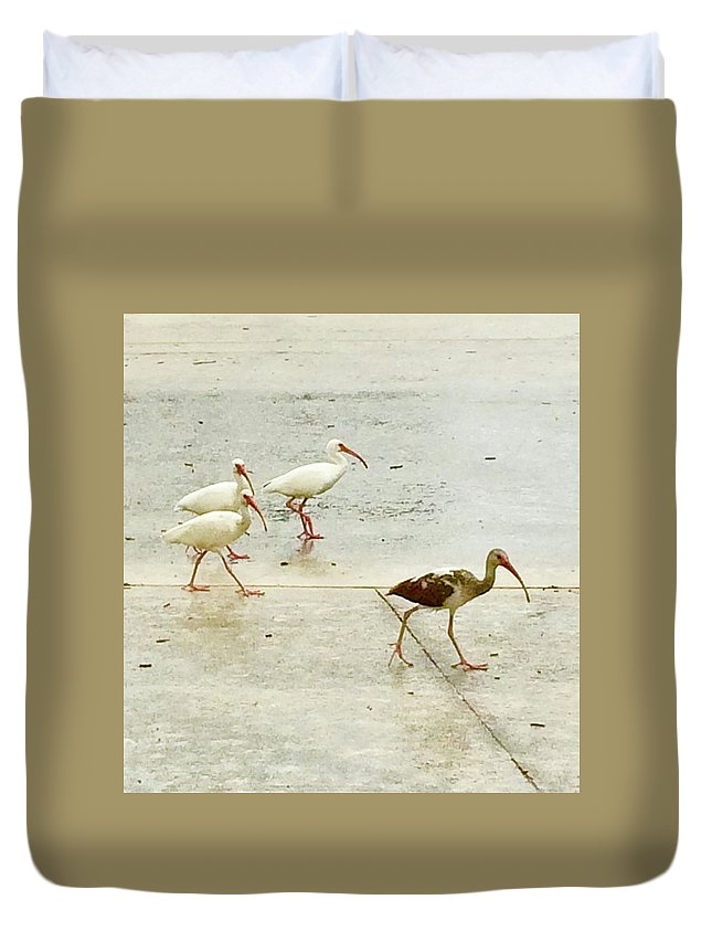 Egrets Duvet Cover featuring the photograph A Step Ahead by Suzanne Udell Levinger