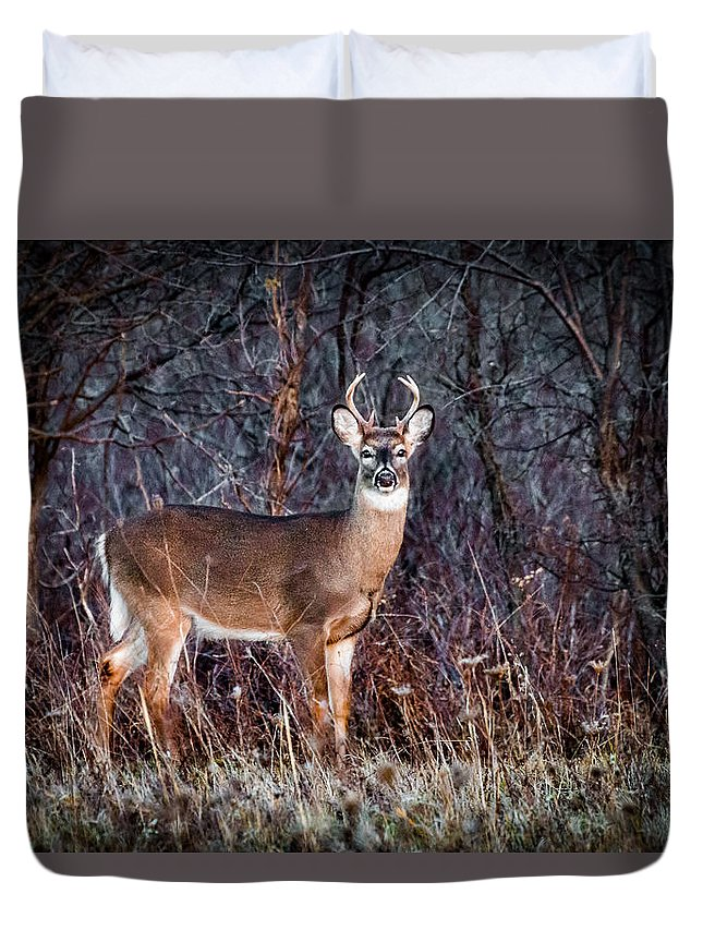 Buck Duvet Cover featuring the photograph A Wary Eye by Sandy Roe