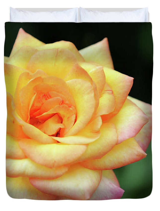 Rose Duvet Cover featuring the photograph A Yellow Rose by Sabrina L Ryan