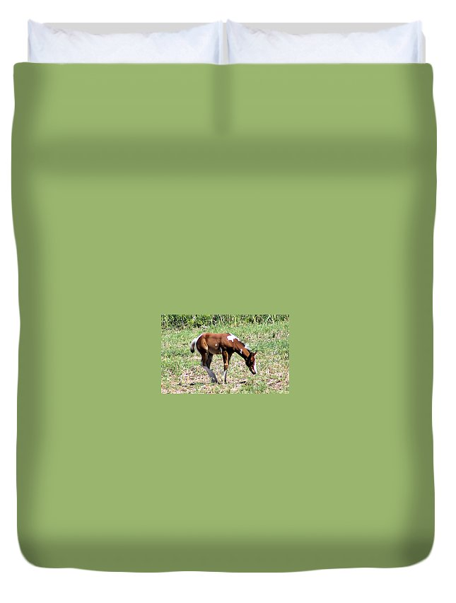 Horses Duvet Cover featuring the photograph A Young Painted Colt by Jeff Swan