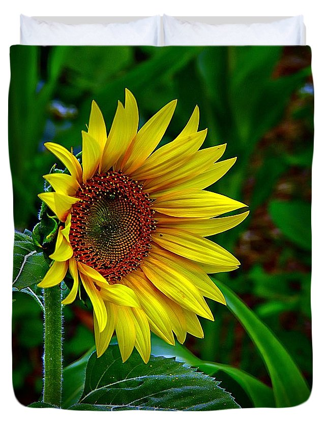 Standing Sunflower Duvet Cover featuring the photograph About Face And Stand Tall by Karen McKenzie McAdoo